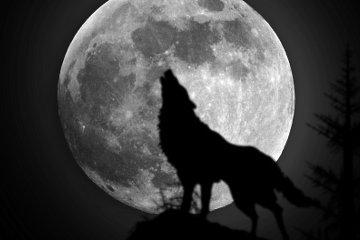 werewolfitunes